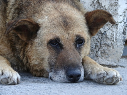 an-old-street-dog-1-1367871-640x480